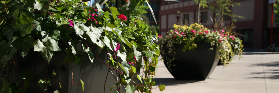 We have provided custom  exterior landscaping services since 1986