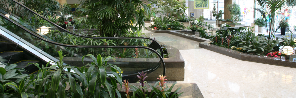 Count On Our 100% Guarantee Maintenance Program All of your interior plants will be regularly  maintained and healthy