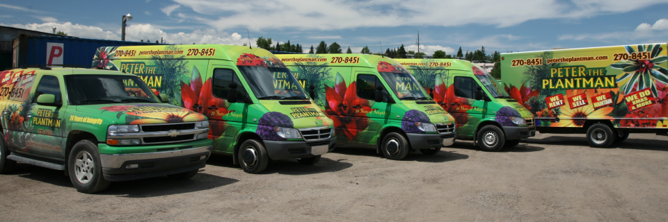 Growing with You Building Planting Relationships Enhancing Office Environments